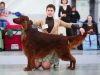 Golden Collar 2014 - Contario Ode Divin Essor - Best Dog, Breed Winner 2014