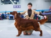 Golden Collar 2014 - Contario Ode Capella - Best of Breed, Breed Winner 2014