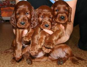 puppies-W