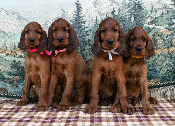 pups-m-litters