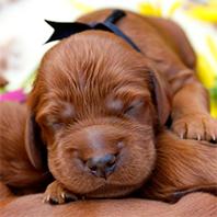 pups-p2