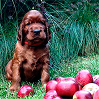 pups-r