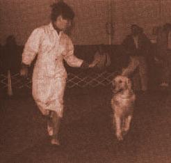 gaiting на коротком поводке