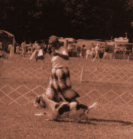выполнение gaiting с коротконогими породами требует определенной сноровки. Необходимо приноровиться к движению собаки и очень хорошо чувствовать ринговку, чтобы уметь управлять собакой.