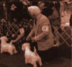 стоят в линию и сконцентрированы на установке собак в стойку