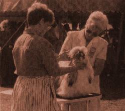 эксперт осматривает ши-тцу, а хэндлер проверяет, хорошо ли стоит собака