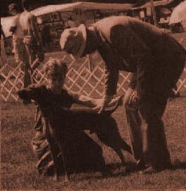 хэндлер сконцентрирован на собаке, а не на эксперте