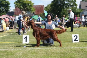 Contario Ode Picasso - Estonian Junior Champion 2014 (10 months)