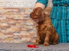 Contario Ode Ti Amo, 5 weeks, red girl
