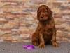 Contario Ode Top Secret, 5 weeks, violet boy