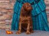 Contario Ode Taleyta, 5 weeks, orange girl