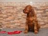 Contario Ode Ti Amo, 6 weeks, red girl