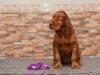 Contario Ode Top Secret, 6 weeks, violet boy