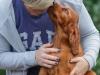 Contario Ode H-puppies 8 weeks