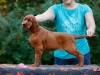 Contario Ode H-litter 9,5 weeks,  pink girl