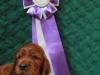 Фиолетовая ленточка, кобель