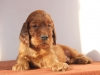 мальчик коричневая ленточка