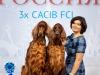 Лучшая пара выставки Россия 2019!