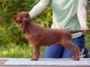 Предлагается великолепный щенок