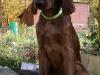 Light green girl, 13 weeks