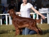 """Владимир - 2012"", Afrodita My Princess For Contario Ode - CAC, Чемп. РКФ, CACIB, BOB, Best in Group - I, ""Лучшая охотничья собака выставки - II"""