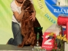 """""""Владимир - 2012"""", Afrodita My Princess For Contario Ode - CAC, Чемп. РКФ, CACIB, BOB, Best in Group - I, """"Лучшая охотничья собака выставки - II"""""""