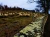 England'sheeps