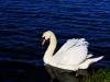 Linlithgow Lake