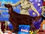 """20.11.2011, Всероссийская выставка \""""Дельта Пал\"""" и выставка \""""Брид\"""""""