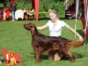 Fansett Secret Contario Ode - Чемпион Национального Клуба породы 2012, Лучшая собака выставки!