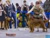 Contario Ode Capella - Лучшая сука породы на Евразии 2012