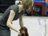 Fansett Secret Contario Ode - CW, J.CAC, Best Junior Dog
