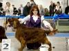 Евразия - 2012, Contario Ode Winconta - CW, CAC, CACIB, BOS, Чемпион Евразии и РКФ