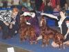 Евразия - 2012, Allure Show Ikona Stilya Glamur Dolls - R.CAC, Contario Ode Capella - CW, CAC, Contario Ode Infiore - 3 отлично