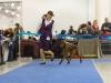 Contario Ode Opera D'Arte - BOS Puppy (day 1) & BOB Puppy (day 2)