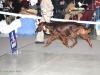 DOGS INTERMEDIATE CLASS - Dioskury Islander - CW, CAC, CACIB, BOS вл. Шиколаева, Москва