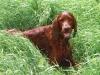 Scirocco's Phil The Red Destiny на охоте