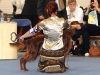 Helsinki Winner 2011, Contario Ode Caprice - 4 отлично в промежуточном классе