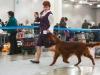 Монопородная выставка ранга ПК в рамках России 2014, Contario Ode Novella - CW, CC