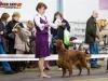 Contario Ode Capella - Победитель клуба 2013, Лучшая собака монопородной выставки!