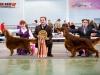 Лучший кобель породы - Applegrove Bechamel и Лучшая собака выставки - Contario Ode Capella