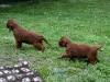 Брат и сестра в возрасте 1 мес