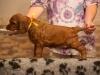 Девочка с золотой ленточкой, 5 недель