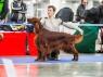 Николь - Лучшая собака Монопородной выставки в 2013 году