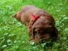 Red girl, 3 weeks