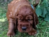 Aqua boy, 4 weeks