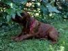 Red girl, 4 weeks