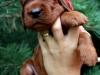 Red girl, 2 weeks