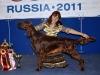 Fansett Secret Contario Ode - Лучший щенок породы на России 2011