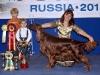 Contario Ode Winconta, Лучшая собака 7 группы на России 2011